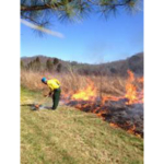 This workshop will cover CRP and Mid-Contract Management options, including herbicide, interseeding, and disking, as well as prescribed fire planning, safety, equipment and a demonstration burn at Ernie Pyle Elementary School Tallgrass Prairie (weather permitting). (Courtesy of Purdue University)