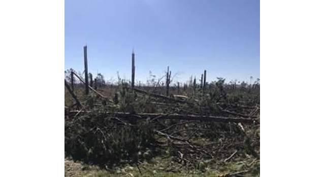 Timber damage from Michael estimated at $1.3B