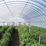 Iowa State University Extension and Outreach will host a short course on using high tunnels in Iowa. (ISU Extension and Outreach)