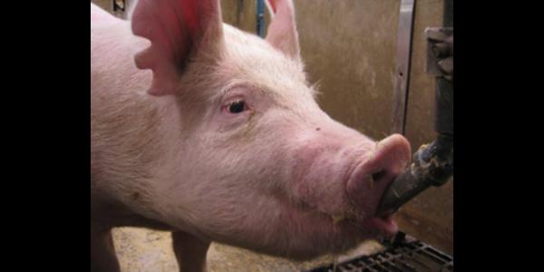 Badger swine symposium Nov. 9