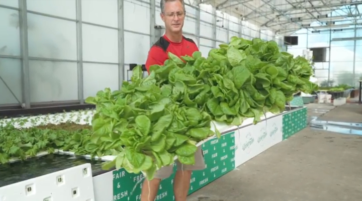 Big Tex Urban Farms boosts production