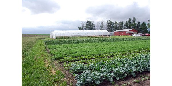 Root and tuber production field day