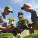 """An online course developed by Iowa State University Extension and Outreach, """"Crops Feed the World,"""" was created to expand what young people know about crops growing in Iowa fields. (Courtesy of ISU Extension and Outreach)"""