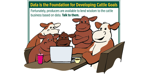 Data foundation for developing cattle goals