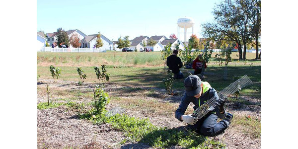 To help people and organizations build and maintain productive community gardens, University of Illinois Extension created the Community Garden Online Webinar Series available now at go.illinois.edu/communitygarden. (University of Illinois Extension)
