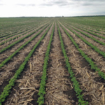 University of Minnesota Extension and North Dakota State University Extension Service are co-hosting the 2018 Conservation Tillage Conference on Dec. 18-19 in Fargo, ND at the Hilton Garden Inn Conference Center. (Courtesy of University of Minnesota Extension)