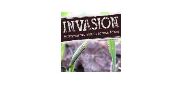 Armyworms march across Texas