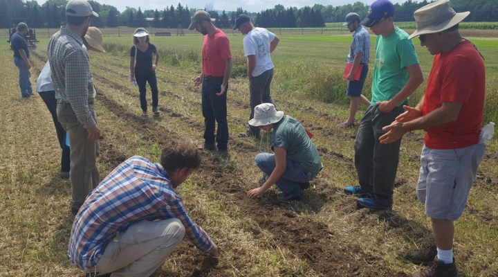 Free webinars cover vegetable cover crops, research