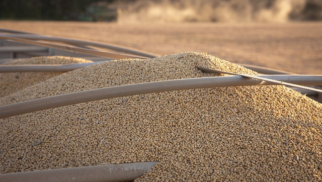 Record soybean harvest amid trade dispute
