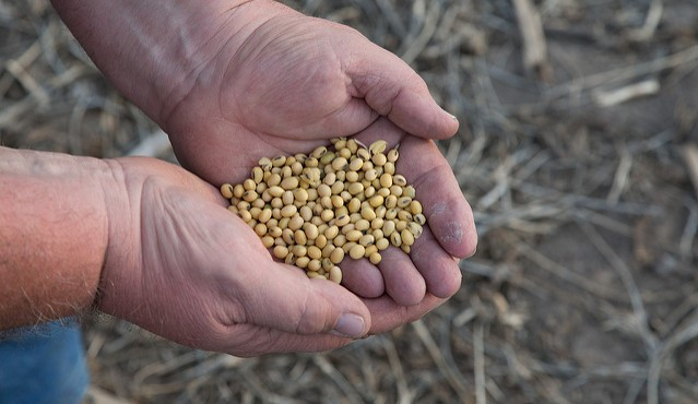 US farmers store record soybean crop