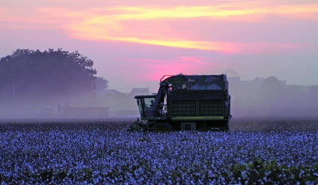 A cotton farmer is battling cancer and couldn't harvest his crop. So his neighbors did it for him.