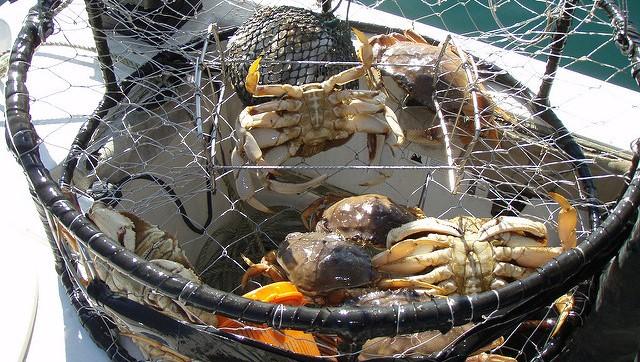 Oregon, Calif. crabbers sue fossil fuel companies
