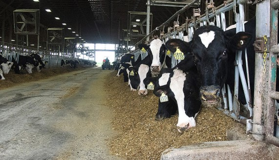 USDA, dairy farmers mark start of Calif. FMMO