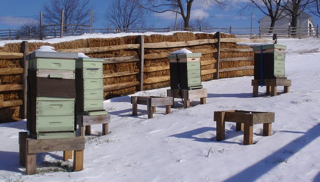 UMaine offers beekeeping courses this winter