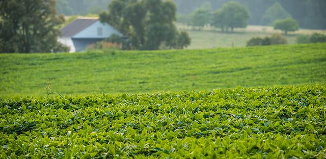 EPA approves dicamba use in Arkansas