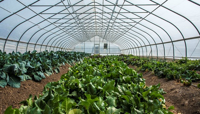 Grants to support urban agriculture