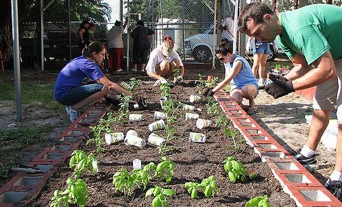 Master Gardener Training program begins Jan. 8