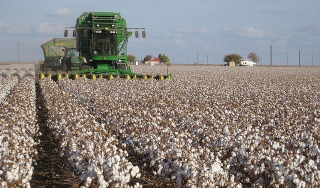 USDA announces Cotton Board appointments