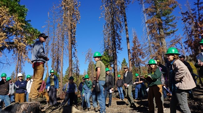 A growing acceptance of 'pyrosilviculture'