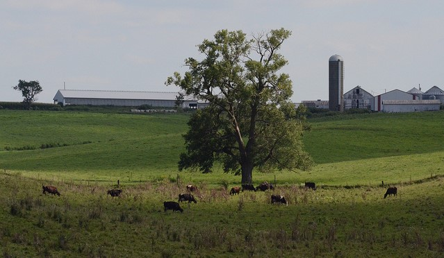 Farm bankruptcies on the rise in Upper Midwest