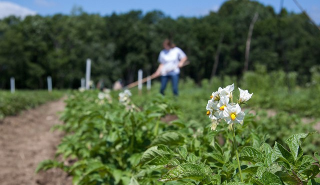 Grant supports organic weed management