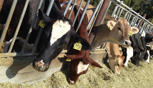Projects aim to reduce dairy methane emissions