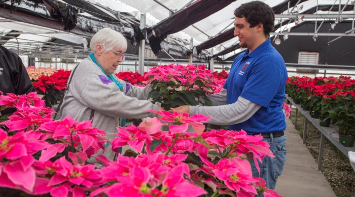UF Horticulture Club hosts Annual Poinsettia Sale