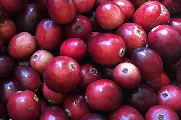 Researcher discusses health benefits of cranberries