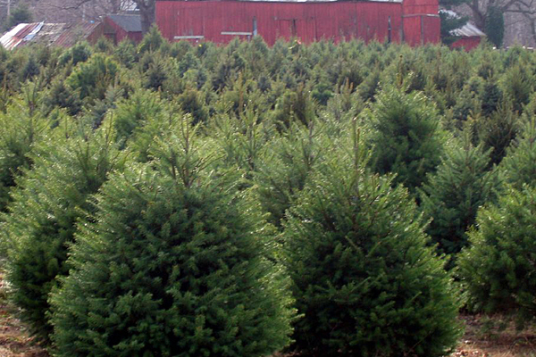 It's Trees for Troops Weekend in New Jersey
