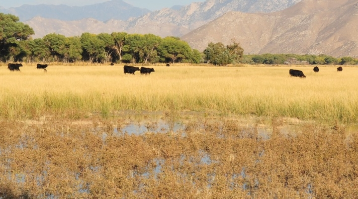 Cattle Raisers statement on new WOTUS rule