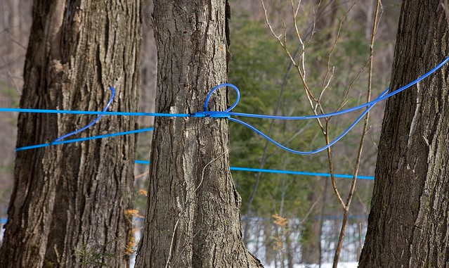 2019 NYS Maple Producers Winter Conference