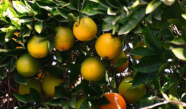 Vacancy on Citrus Pest & Disease Committee
