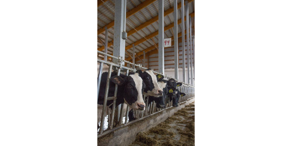 Dairy Revenue Protection Program info meetings