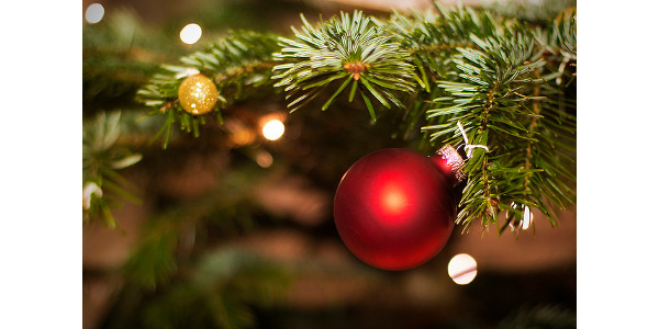 Caring for Christmas trees