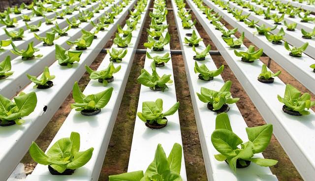 New hydroponics program at Roger Williams