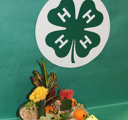 It's time to apply for 4-H Scholarship, honor club