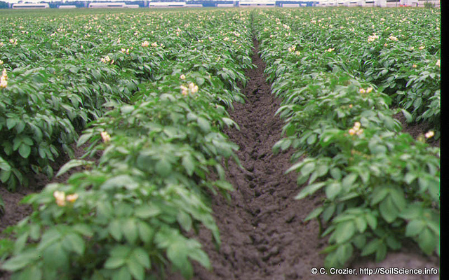 NCDA&CS announces specialty crop block grant recipients