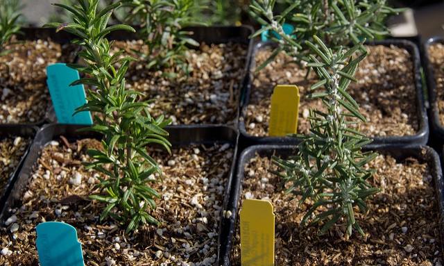 Master gardeners plan plant clinics