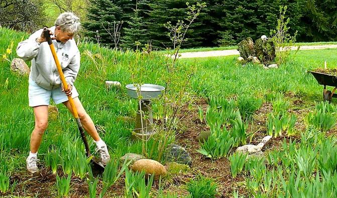 Deadline extended for Master Gardener program