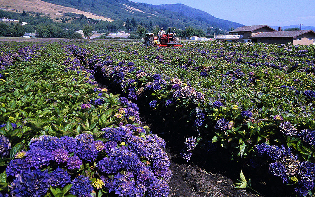 USDA to conduct floriculture survey