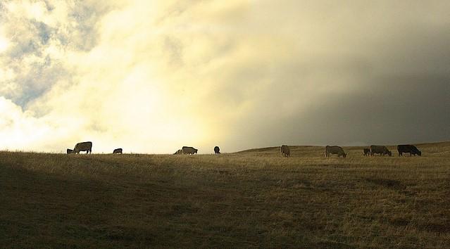 Cattle Raisers on passage of 2018 farm bill