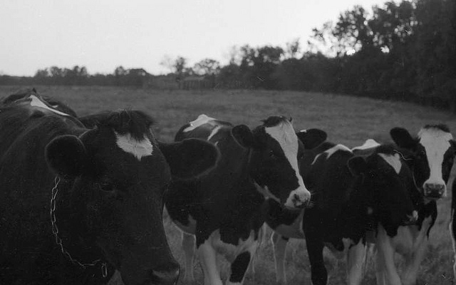 Value-Added Dairy Conference rescheduled for January, 14-15