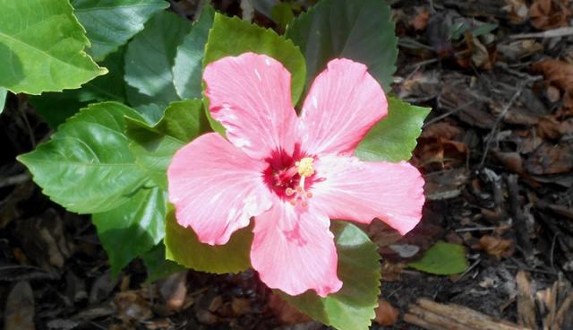 Gardener offers Florida landscaping tips