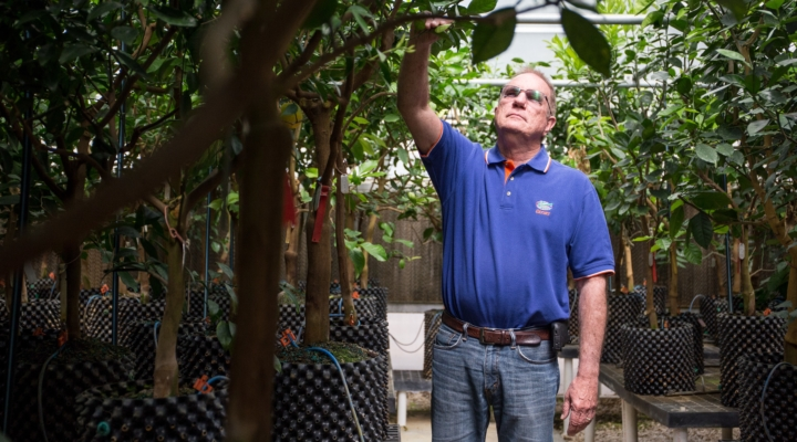 New UF/IFAS citrus trial data available soon