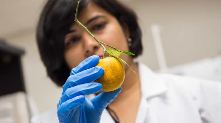 UF/IFAS 'Citrus Nutrition Day' to include field tours