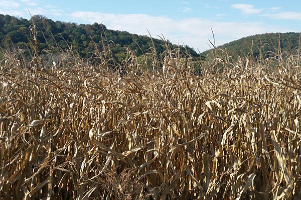 243 acres of farmland preserved in Bradford County