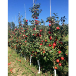 The 2019 Northwest Michigan Orchard and Vineyard Show is scheduled for Jan. 15-16 at the Grand Traverse Resort in Acme, Michigan. (Courtesy of MSU Extension)