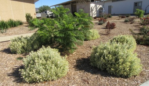 Plants evaluated for low water use performance