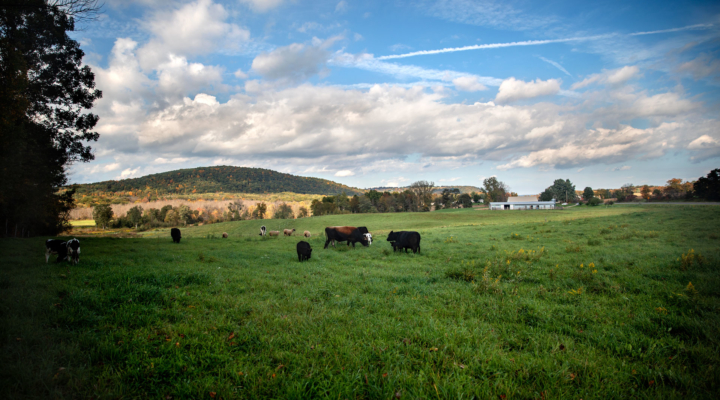 New report focuses on future of NY livestock