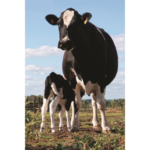 A webinar discussing changes dairy producers should be aware of in the new farm bill will be held on Thursday, Dec. 27 at noon. (Courtesy of ISU Extension and Outreach)